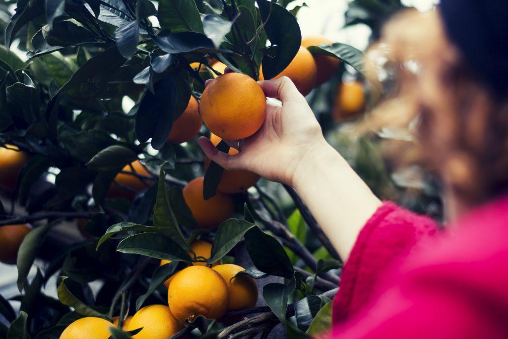 stagionalità arance cucina consapevole